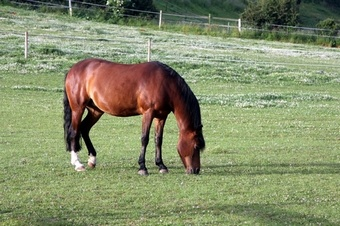 MG70 Equine Paddock & Grazing Grass seed > Equine Mixtures