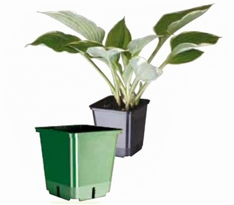 Square Pot (Various Sizes) Growers Collection > - Container Pots